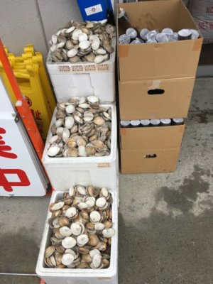 ラーメン金子のお店の前にある貝殻