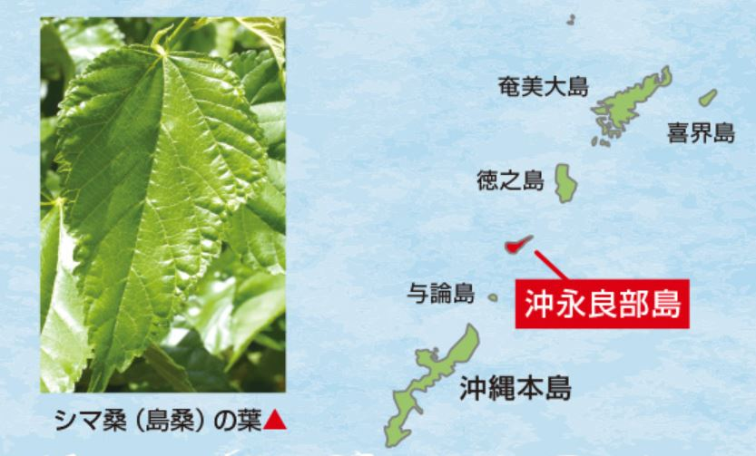 桑の葉の中でも、特に含有量が高い島桑の青汁
